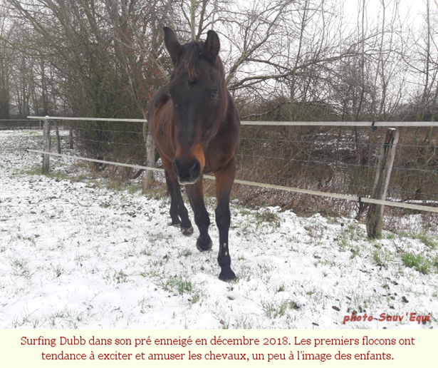 Chevaux_froid_001
