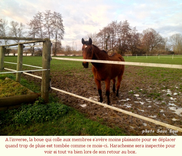 Chevaux_froid_002